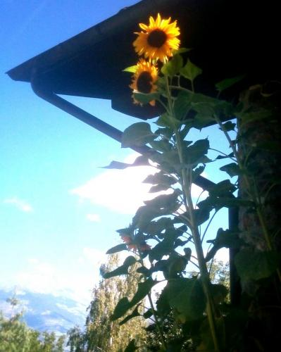 bondine appartamenti uso turistico valle d aosta (15)